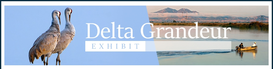 Delta Grandeur Exhibit